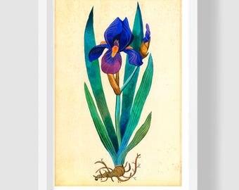 Blue Iris Painting, Iris Watercolor, Iris Wall Art, Iris Botanical Print, Azure Iris Poster, Iris Wall Decor, Iris Botanical Illustration