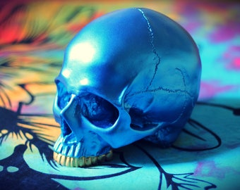 Hand Painted Metallic Blue Realistic Faux Human Skull Replica with Removable Jaw & Gold Teeth