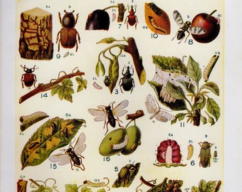 1920s INSECTS Print, Vintage Antique Book Plate prints, beetles ants flies plate 17, insect art illustrations