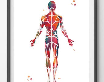 Muscular System Watercolor Print anatomy art Human Muscles medical art poster skeletal muscles giclee print human body wall art decor