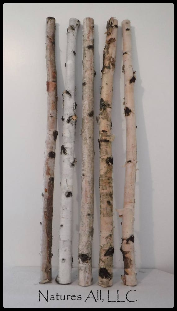 White Birch/Decorative White Birch/White Birch Sticks 5 PC/3 Ft. Lengths/White Birch Pole/Rustic Wedding And Home Decor/Shipping Included