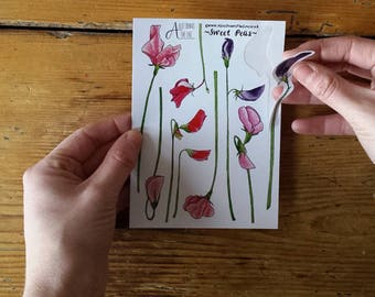 Sweet Pea sticker sheets by Alice Draws The Line; great for children's birthday party bags. A6 sheets of sweet peas stickers drawn by Alice