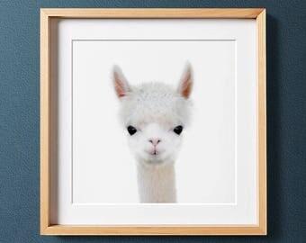 Farm animal prints, Baby alpaca print, PRINTABLE art, Nursery decor, Nursery wall art, Baby animal prints, Animal nursery art, Alpaca photo
