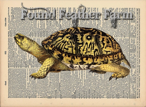 "Vintage Antique Dictionary Page with Antique Print ""Turtle One"""