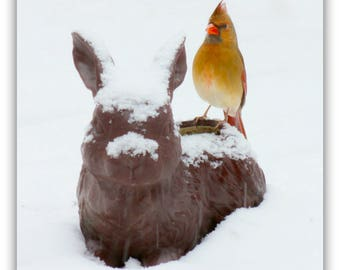 Female Cardinal and Bunny