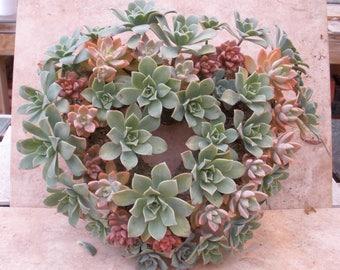 Succulent heart wreath, wedding, anniversary, birthday, housewarming, baby shower, unique gift, SucculentBlue