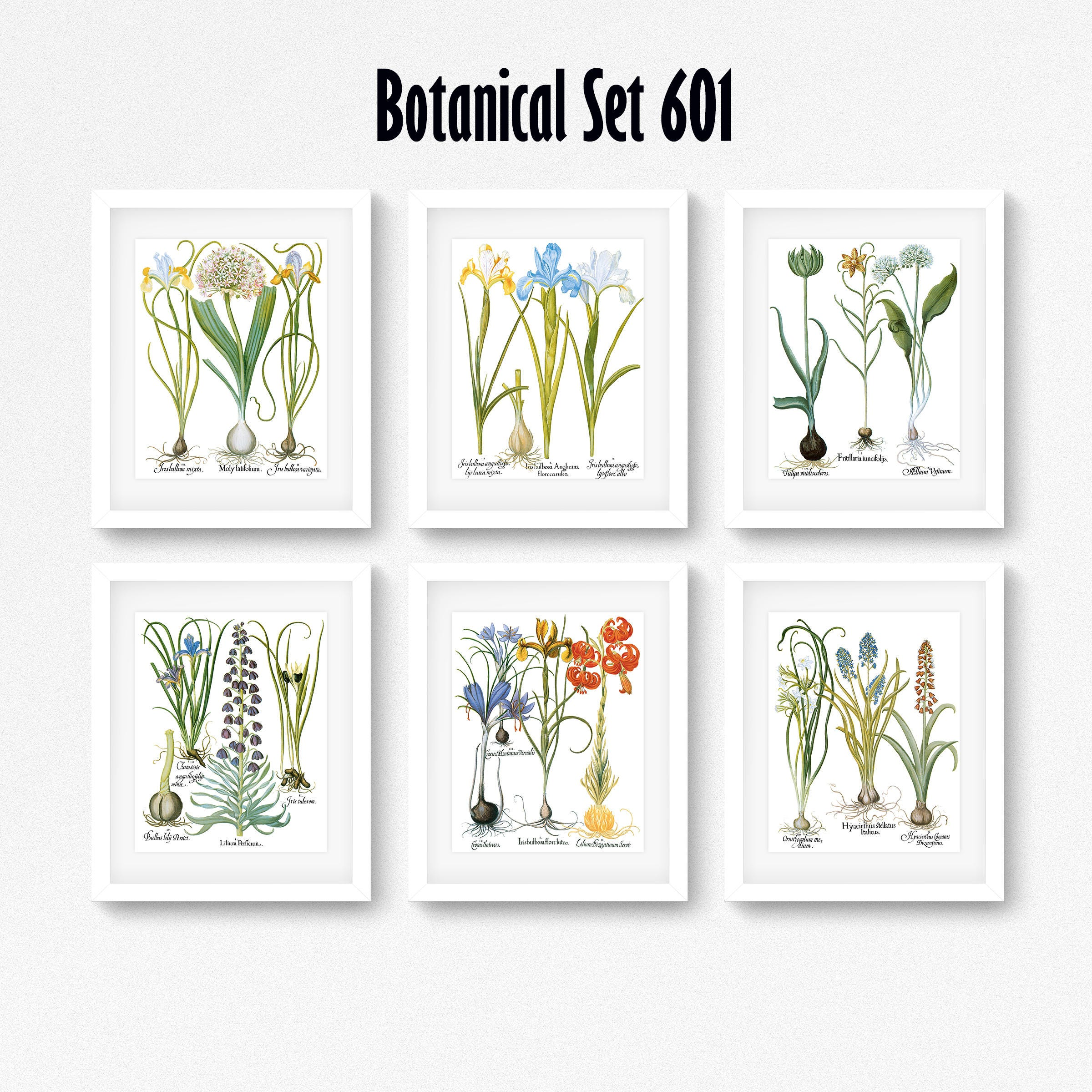 Botanical Print Set Of 6 Botanical Wall Art Floral Print