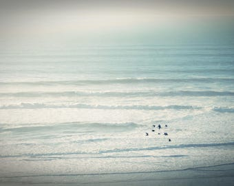 Seagulls Over Ocean - Stock Photography, Digital Download, Photograph, Nature