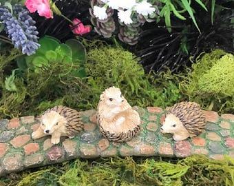 Miniature Hedgehogs - Set of 3!