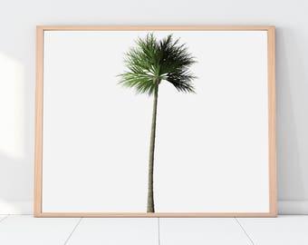 Superbe Palm Tree, Palm Tree Print, Palm Tree Decor, Palm Tree Wall Art,