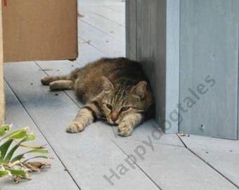 Hemingway Cat Etsy