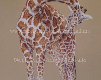 "Giraffe: Original Artwork - 10"" x 8"""
