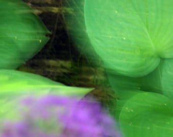 Abstract photography. Nature art. Flora vegettion, green, purple, violet. Poetry, abstract decoration.