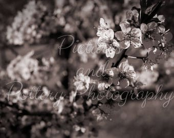 Black and White Spring Blooms Photography Print