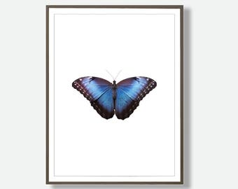 Butterfly Print,  Butterfly Art Prints, Printable Butterfly, Large Printable Poster, Butterfly Wall Art Print, Butterflies, Insect Wall Art