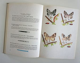 Vintage Illustrated butterfly Book | Vintage butterfly Illustrations | butterfly Illustrations