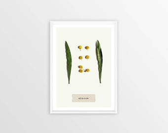 A4, mimosa, herbarium, picture, Wall art, Decoration, Home decor, Print, Mural Art, botanical