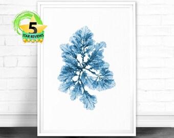 Sea Coral Print, Sea Life Art Print, Coral Art Print, Blue Coral Print, Seaweed Print, Marine Life Print, Beach Decor, Seaweed Coastal Decor