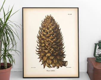 Pine cone print, Winter print, Pinecone print, Pine cone art, Instant download botanical print, Botanical art, Conifer print, 8x10, 11x14