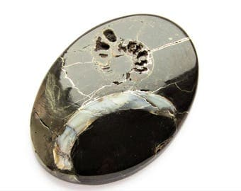 Ammonite cabochon 46x33x4 mm
