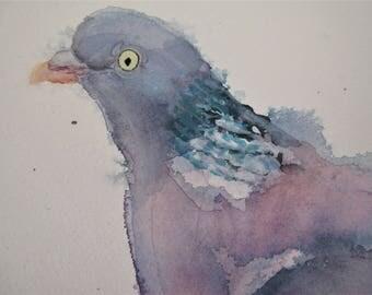 Wood Pigeon/Pidgeon/Wood Pigeon Original watercolour