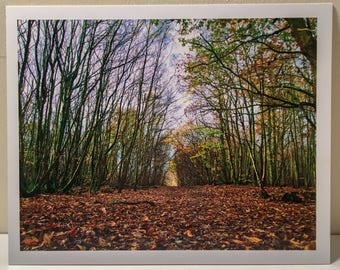 """10""""x8"""" Views Wood, East Sussex Photographic Print"""