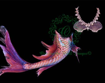 Mermaid Tail and Bra Digital overlay. 2 png files (transparent backgrounds)