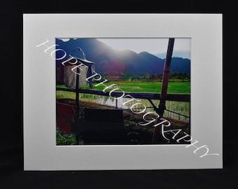 Asia/Rice field Photo