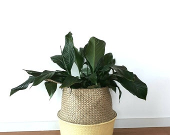 Cane basket for storage, indoor plants or just to brighten your home.
