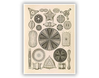 Ernst Haeckel Print, Scientific Illustration, Biology Art, Diatom, Algae, Botanical Decor, Vintage Style Artwork, NH2