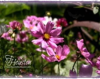 Botanical Art Card 4