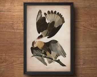 Audubon print, Eagle print, Antique bird print, Eagle poster, Birds of America, John James Audubon, Wall art, Wall decor, Large art