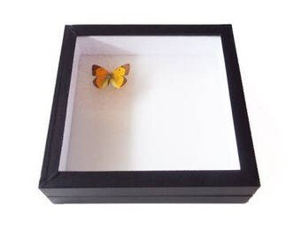 Insect box - 20x20cm black - to store your butterflies and insects.