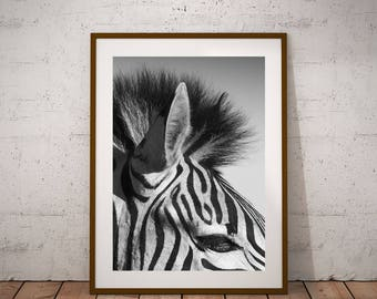 zebra decor | etsy