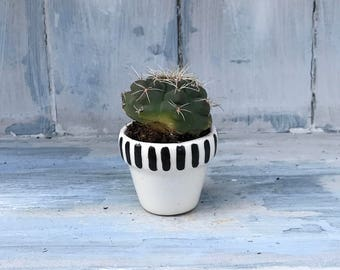 Mini cactus pots