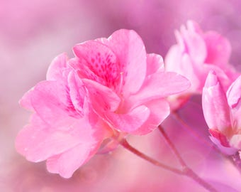 "Fine Art Photography, Pink, Flower, Blossom, Bokeh, Spring, Wall Art, Bedroom Decor, Wall Decor, Art Decor, Home Decor - ""Pink Bloom"""