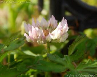 Pink Bloom, Flower, Spring, Nature