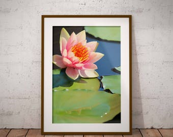 Light Pink Waterlily, picture of a waterlily, downloadable photo, flower photography, pictures of flowers, vertical flower photo,