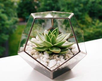 Geometric Copper Glass Terrarium & Succulent