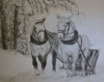 Draft horses pulling sled