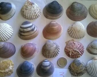 3 c) ocean shells, grass, clam shell