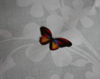 transparent Butterfly multicolored 2.1 x 1.1 cm, n72