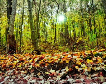 Landscape Photography Fall Forest Sunlight Print