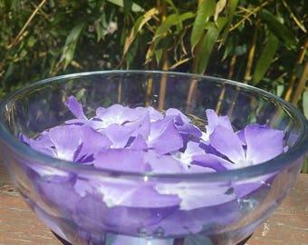 Periwinkle Flower Essence