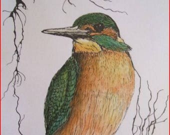 """""""Kingfisher"""" ink on white canson paper."""