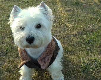 Brown short coat for small dogs