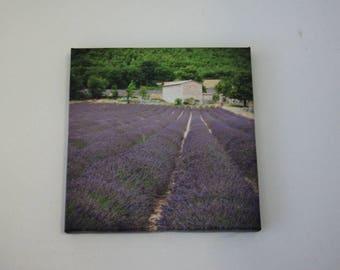 FRAME on canvas original Photo - fields of lavender 20 X 20
