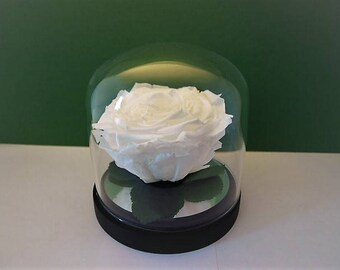 100% Real Large Preserved White Rose in Small Glass Belle Jar Dome  - UK Supplier & FREE Shipping