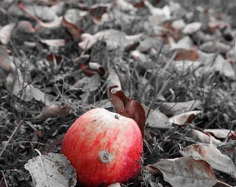 Art Photograph--Red Apples--Gifts for men women, for her, him, macro, kitchen, color, minimalist, nature, decor, wall art, prints