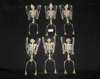 Taxidermy Fruit Bat Large Skeleton 6 Pcs